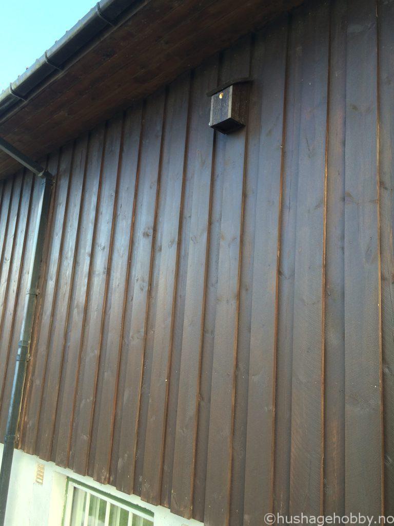 Enkel fuglekasse vegg