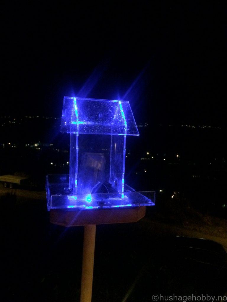 Fuglebrett med blått lys